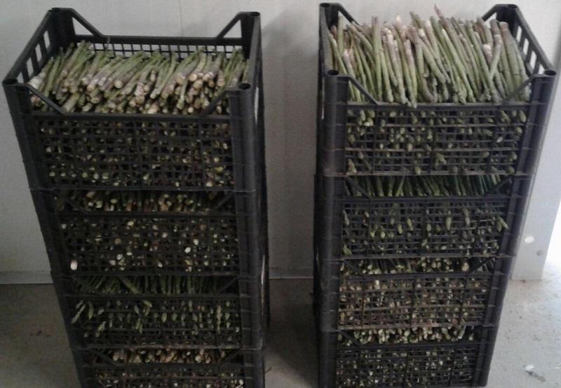 asparagi in cassetta